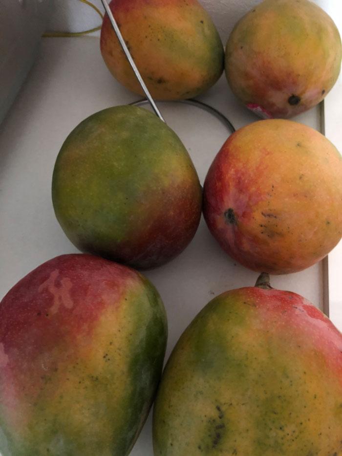 コストコのメキシコ産マンゴー