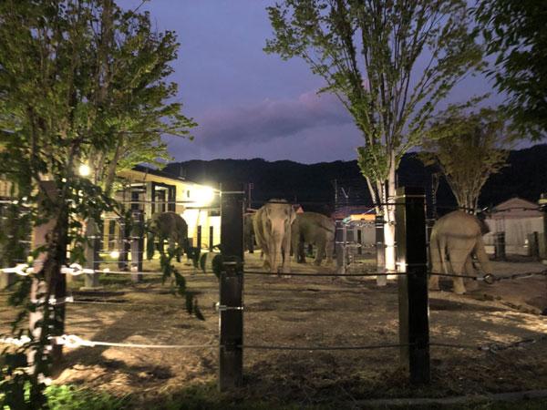 京都市動物園のゾウ